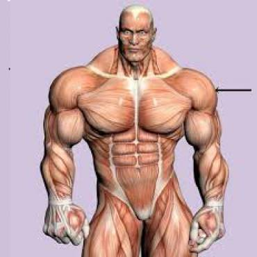 Best-Steroids-in-Bodybuilding.-Determine.jpg